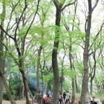 4月のカニ山は14日に開催です!