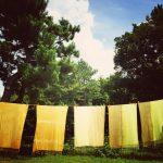 6/8 かに山草木染め体験&野草料理開催します